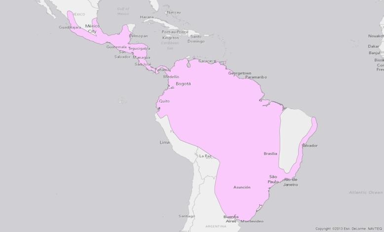 neotropical-otter-lontra-longicaudis