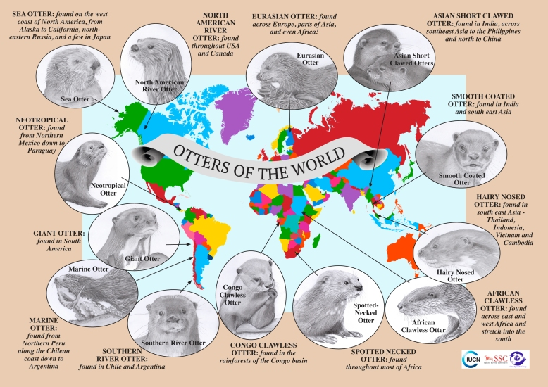 Otters of the World MAP